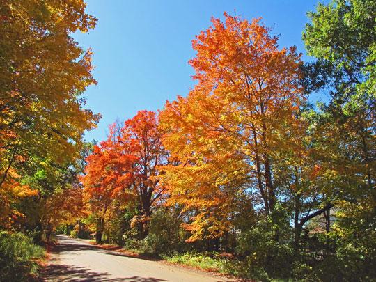 autumnls